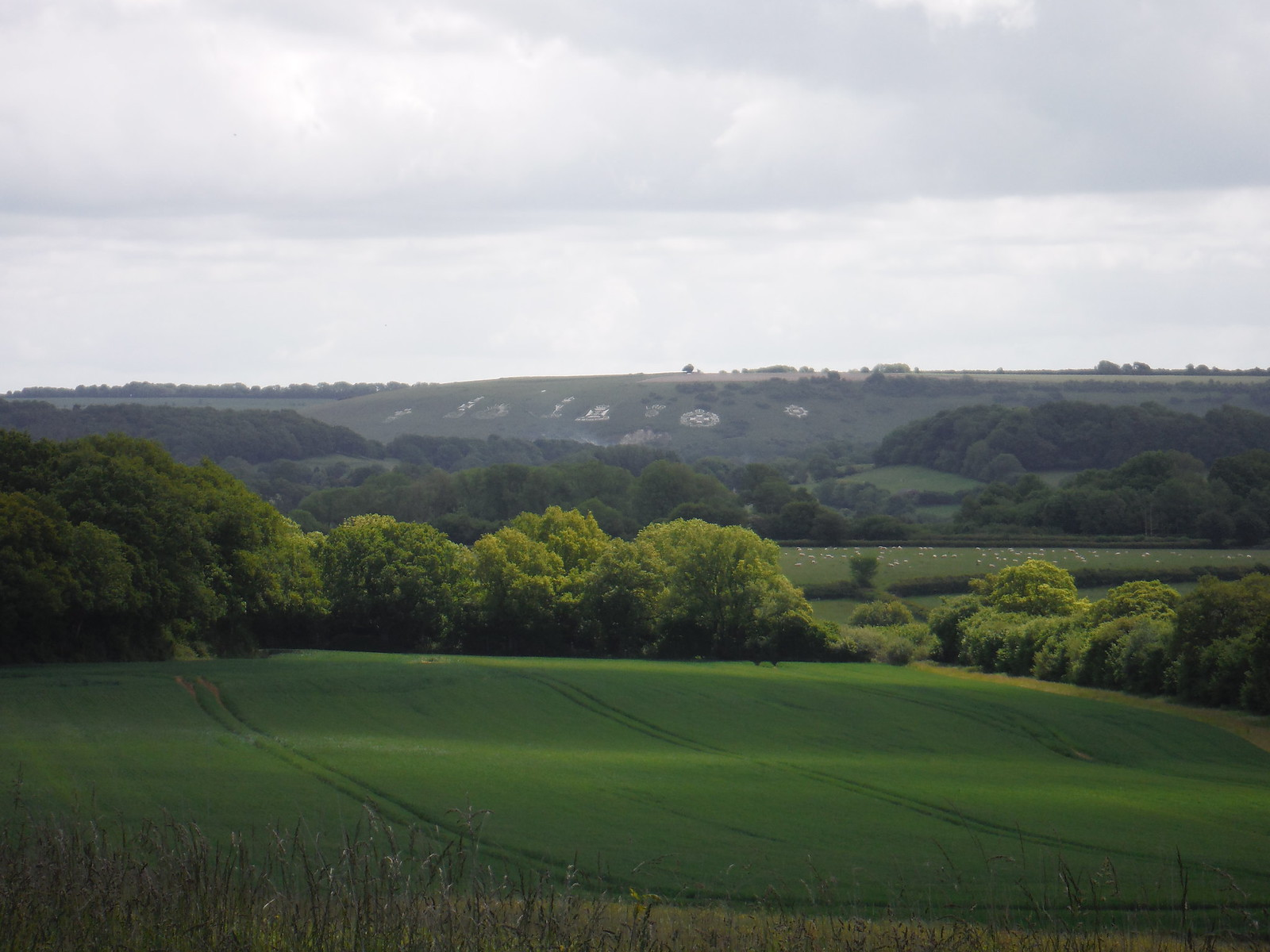 Fovant Badges far view SWC Walk 249 Tisbury Circular via Dinton and Fovant