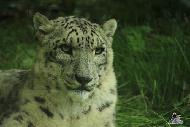 Eisbär Fiete im Zoo Rostock 12.07.2015 097
