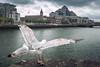 Seagulls by Quicksil7er