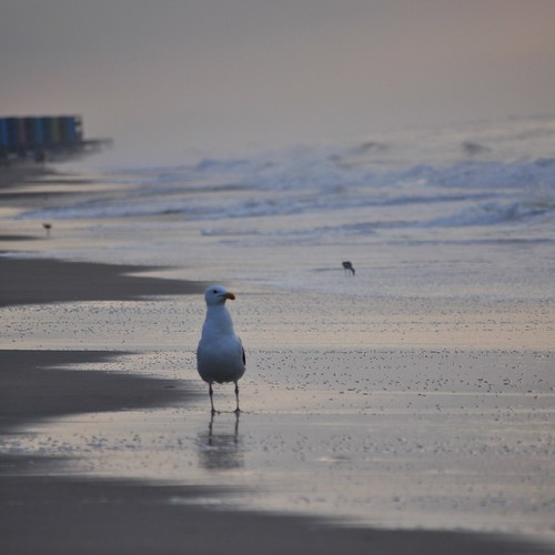 bird beach water sunrise surf