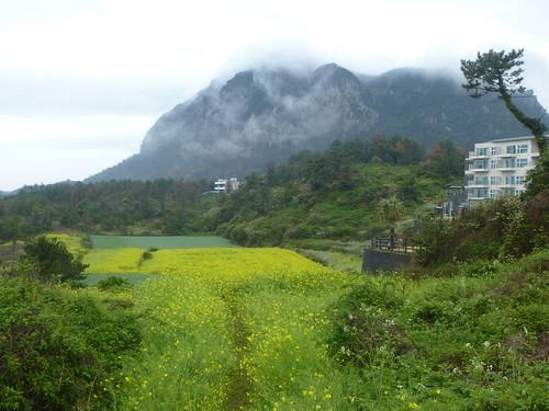 Co-Jejudo-Seogwipo-Sentier Olle 10-Sanbangsan (19)