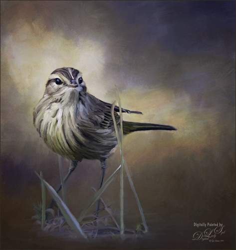 Image of a small bird on a painted background