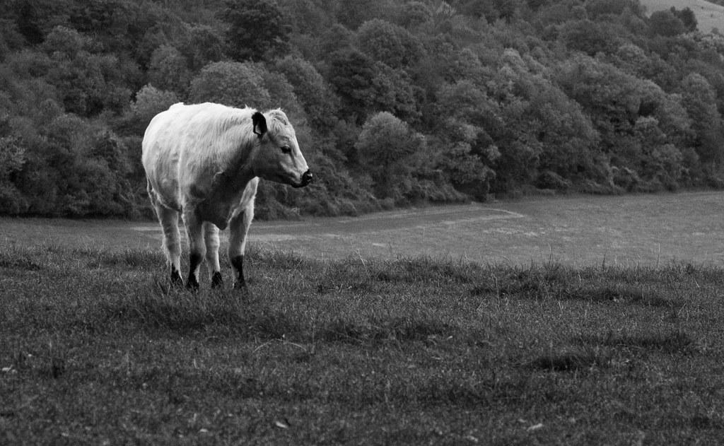 Gaze upon my meadow