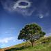 The Pohutakawa tree by Jonathan!
