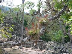 Copan ruins in the jungle