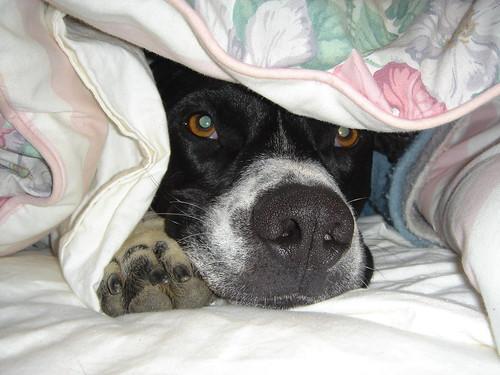 bedtime by KJKing