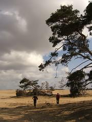 dunes in Veluwe