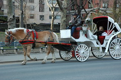 cart(0.0), vehicle(1.0), transport(1.0), coachman(1.0), horse harness(1.0), horse and buggy(1.0), land vehicle(1.0), carriage(1.0),