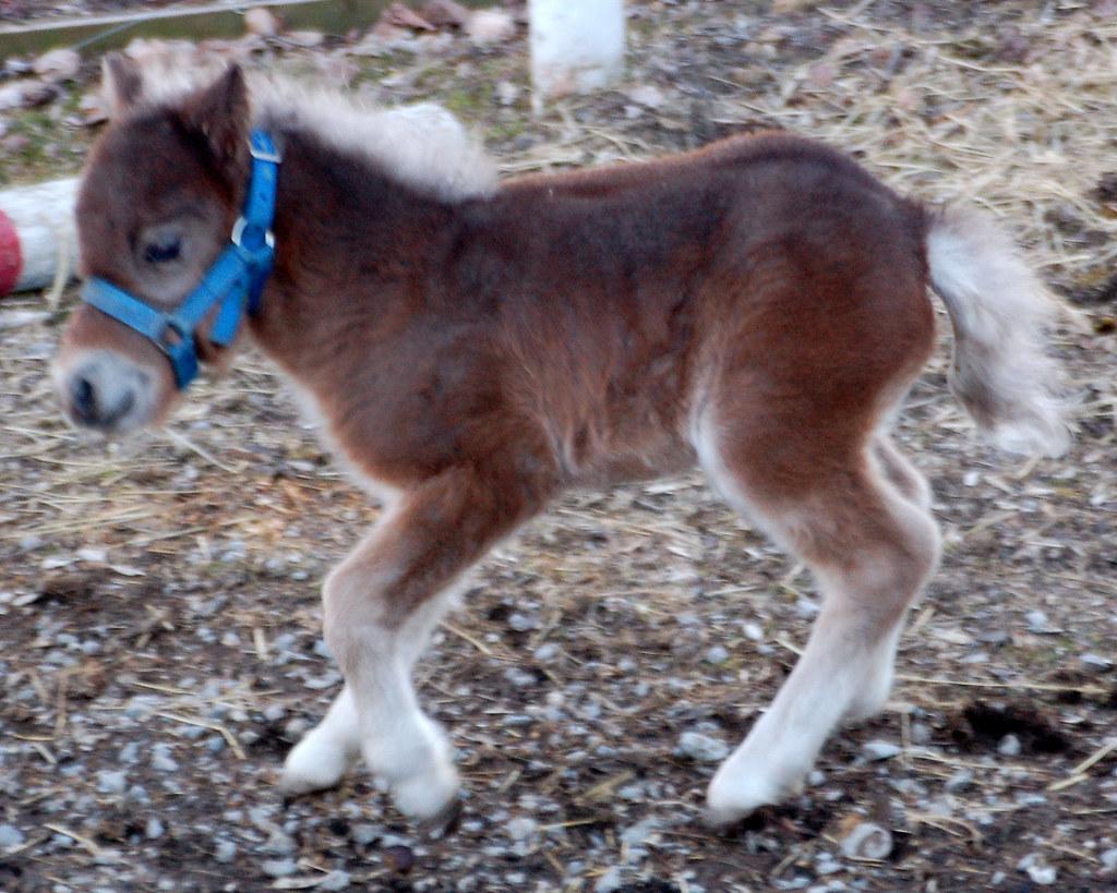 New Born Baby Horses New Born Autism Symptoms Baby