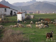 goatherd(0.0), agriculture(1.0), farm(1.0), village(1.0), field(1.0), ranch(1.0), sheeps(1.0), sheep(1.0), herd(1.0), grazing(1.0), herding(1.0), meadow(1.0), pasture(1.0), rural area(1.0), grassland(1.0),