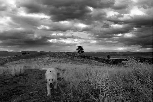 sky blackandwhite bw pet clouds goldenretriever puppy landscape hobbes ©tylerknottgregson