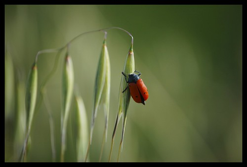 ... and the ladybug prepares herself for another long night