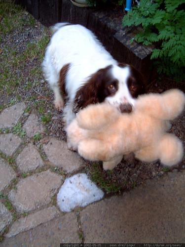 sadie and a stuffed animal   dscf1536