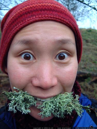 kat eating lichen   dscf3402