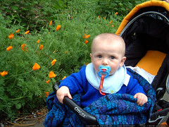 nick, his pacifier and some poppies   dscf5250