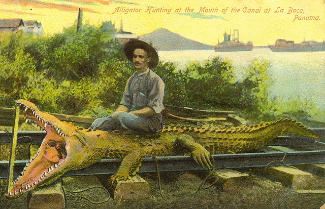 Alligator hunting, La Boca, Panama   Flickr - Photo Sharing! Louisiana