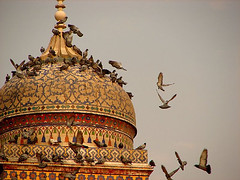 Pigeons on the dome of the Wazir Khan Mosque - Lahore, Pakistan