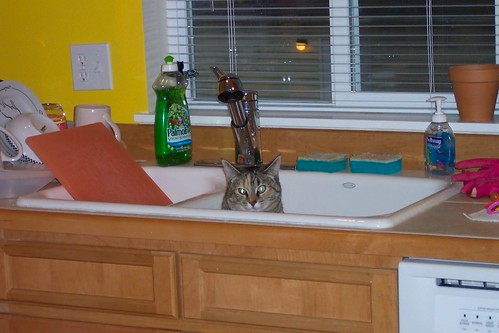 Cat in sink.