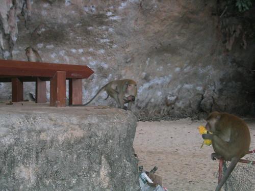 thailand, railay, monkeys, phra nang IMG_1229.JPG