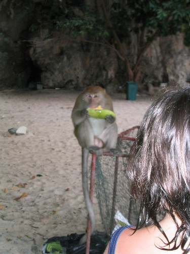 thailand, railay, monkeys, phra nang IMG_1231.JPG