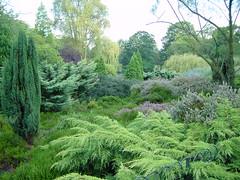 Greenwich Park shrubbery