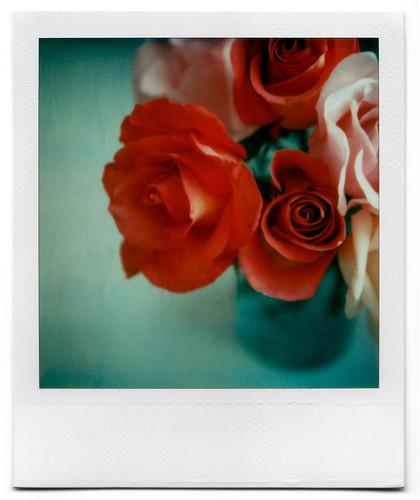 Roses by Grant Hamilton