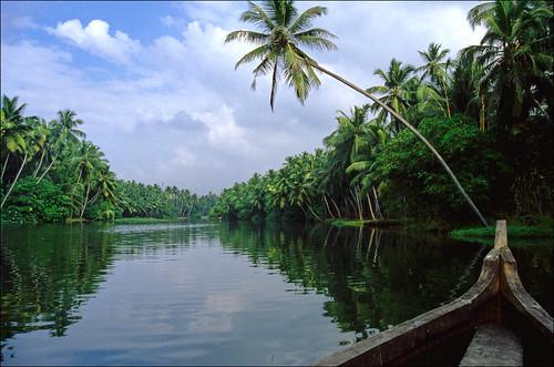 trees india green palms geotagged interestingness slide kerala palm explore palmtrees transparency getty 10k 100k backwaters 5k backwater 1k 50k 3k 2k 25k godsowncountry flickrfly ronlayters geo:lat=843632 geo:lon=769557 slidefilmthenscanned 75k