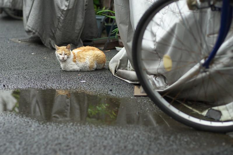 東京路地裏散歩 上野 ネコ 2015年7月5日
