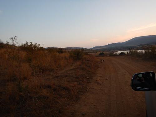 Jackal in the road