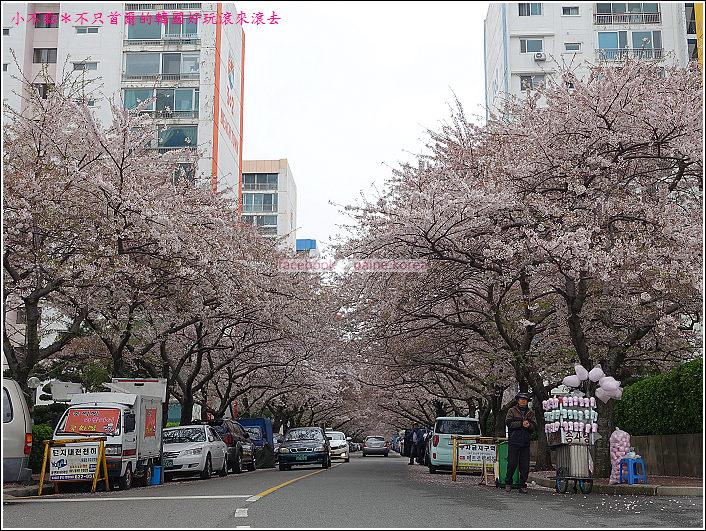 釜山南川洞櫻花隧道 (64).JPG