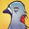 understandably angry pigeon by throgers