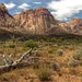 Red Rock Canyon Spring by Mountain Man JC13