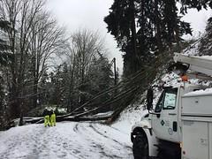 PSE crew/tree at 4800 east mercer way