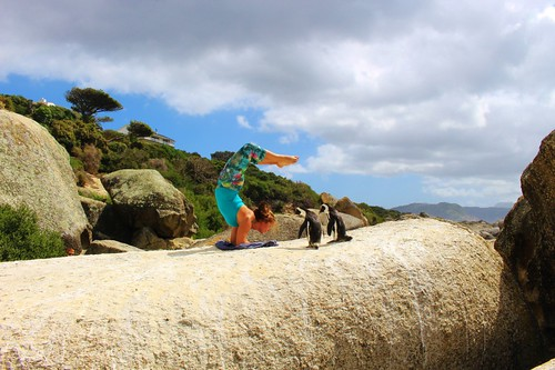 Teaching the Penguins how to do Scorpion Pose