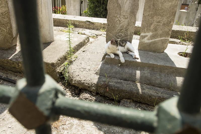 Kitty & Eyüp Sultan Mosque - Istanbul