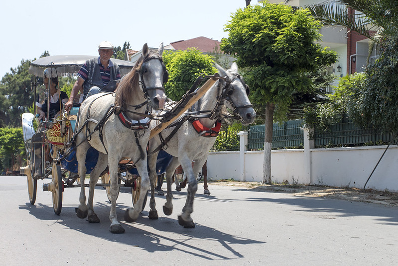 Horse-drawn phaeton carriage in Buyukada Island, Turkey