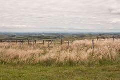 Clôtures / Fences