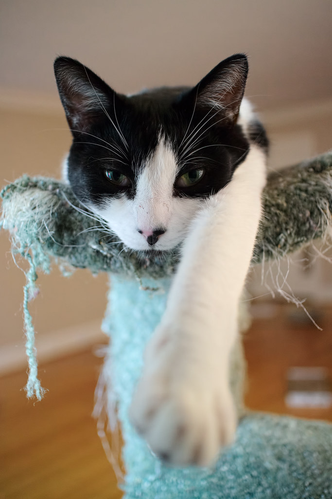 Our cat Boo stretches out on top of the cat tree