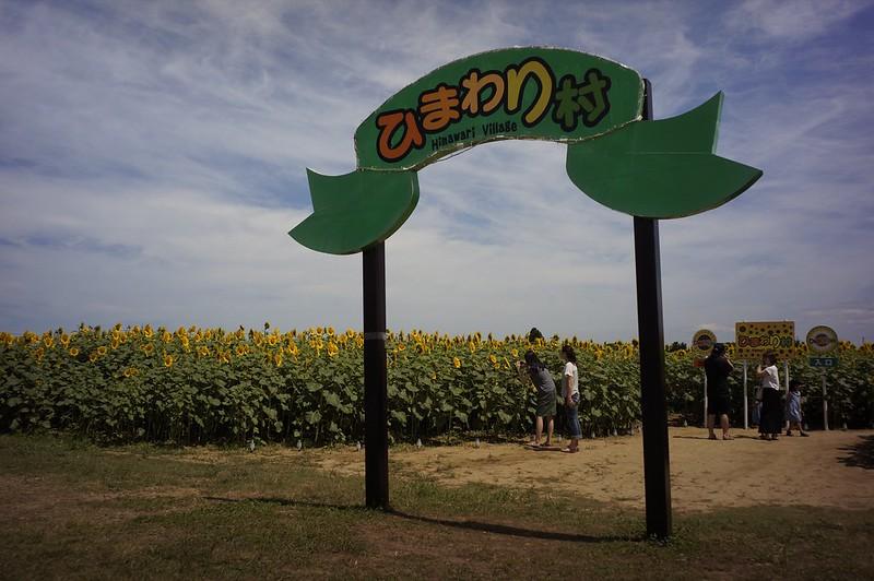ひまわり村 その2 ビオゴン編