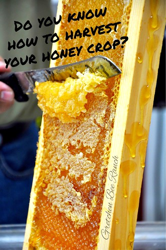 Our first Honey harvesting classes are set for August 1st and again on the 15th. Check our website for more info http://www.gretchenbeeranch.com/education/beekeeping_classes.html