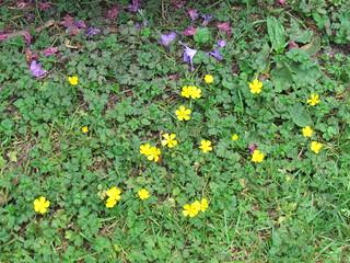 Flowers at Volunteer Park