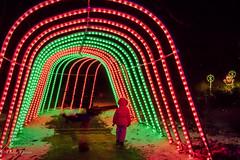 Allee of Lights