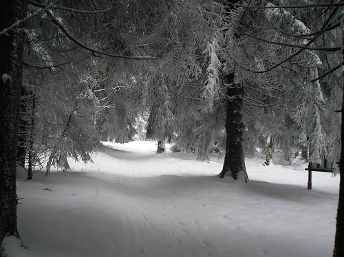 Winterwald am Schneckenstein/Sachsen