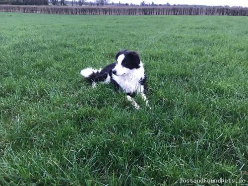 Sat, Feb 25th, 2017 Lost Male Dog - Clonfert, Lisbeg, Galway