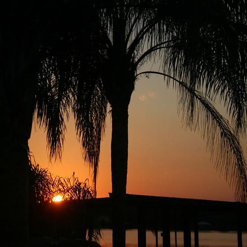 2017 february winter florida lakeplacid lakecarrie sunset palmtree evening canoneosdigitalrebelxt