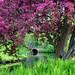Frühlingsfarben im Tiergarten by Robert.B. Photography