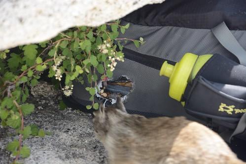 Squirrel Photobomb 2