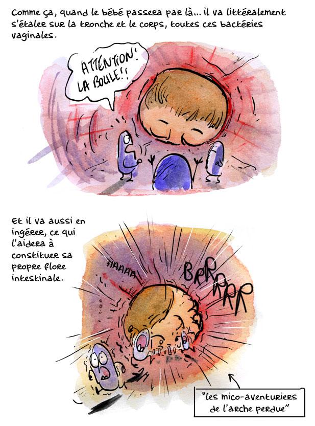 placenta10