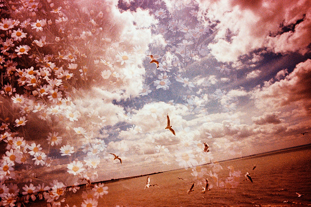 Seagulls and Flowers