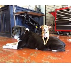 :paw_prints: #animallovers #animal_captures #doglovers #dogstagram #dogsofinstagram